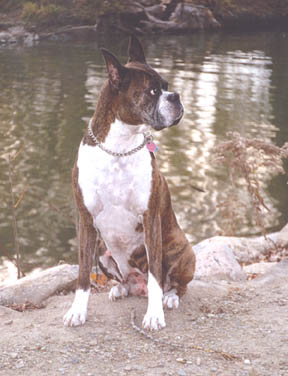 Java at 9 yrs